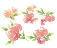 Elementi floreali della carta di Geeting Immagini Stock