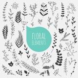 Elementi floreali La raccolta della molla fiorisce, foglie, dente di leone Fotografia Stock