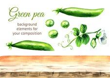 Elementi freschi verdi del fondo dei piselli Illustrazione disegnata a mano dell'acquerello isolata su fondo bianco royalty illustrazione gratis