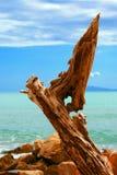 Elementi legno ed acqua Fotografia Stock