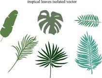 Elementi tropicali di progettazione delle foglie illustrazione di stock