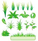 Elementi verdi per il disegno. Fotografia Stock
