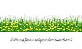 Elemento de la decoración del ranúnculo y de la hierba ilustración del vector