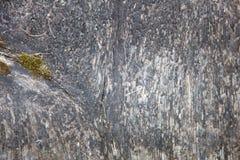 Elemento de madera rústico natural de madera del fondo del eco, gris oscuro y blanco viejo de la textura del piso con cierre verd foto de archivo