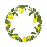 Elemento decorativo del vector de la plantilla con agrios en círculo stock de ilustración