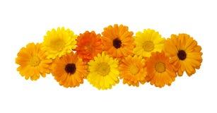 Elemento decorativo floral hermoso para el diseño Fotografía de archivo libre de regalías
