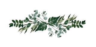 Elemento decorativo moderno da aquarela Grinalda verde redonda da folha do eucalipto, ramos das hortaliças, festão, beira, quadro ilustração do vetor