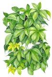 elemento del arbusto del Hada-cuento aislado en blanco Fotos de archivo