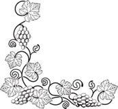 Elemento del diseño de la vid de uva Imagen de archivo