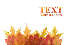 Elemento del diseño de las hojas de otoño fotos de archivo