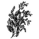 Elemento del diseño en un fondo blanco Fotografía de archivo