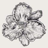 Elemento del diseño floral Fotografía de archivo