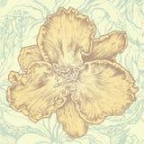 Elemento di disegno floreale e backgrou floreale astratto Immagine Stock Libera da Diritti