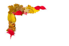 Elemento di disegno Struttura d'angolo delle foglie cadute Fotografia Stock Libera da Diritti