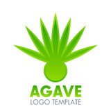 Elemento di logo della pianta dell'agave sopra bianco Fotografie Stock Libere da Diritti