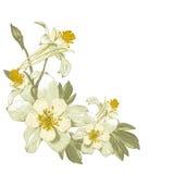 Elemento di progettazione floreale con i fiori di fioritura di bianco Immagini Stock Libere da Diritti