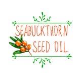 Elemento dibujado mano del diseño del VECTOR: ` del aceite de semilla del seabuckthorn del ` Fotos de archivo