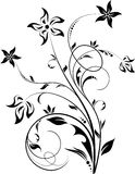 Elemento floral Fotografia de Stock