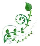 Elemento floreale illustrazione vettoriale
