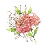 Elemento floreale della cartolina d'auguri Immagini Stock Libere da Diritti