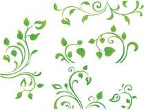 Elemento floreale verde Fotografie Stock Libere da Diritti