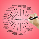 Elemento GMP-HACCP de la escritura de la mano de las mujeres para el uso en la fabricación Fotografía de archivo libre de regalías