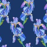 Elemento inconsútil del modelo con las flores del iris Foto de archivo libre de regalías