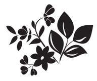 elemento negro de la planta para el diseño Imagen de archivo