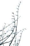 Elemento orgánico decorativo. Foto de archivo libre de regalías