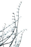 Elemento organico decorativo. fotografia stock libera da diritti