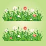 Elemento senza cuciture di vettore dell'erba e del fiore illustrazione vettoriale