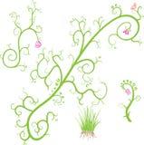 Elementos abstractos de la flora Stock de ilustración