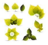 Elementos abstratos frescos da folha Foto de Stock
