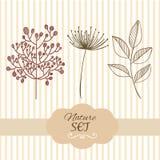 Elementos ajustados da natureza botânica da refeição matinal Mão desenhada Imagem de Stock