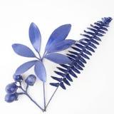 Elementos azuis do projeto da folha e do fruto foto de stock royalty free