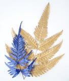 Elementos azuis do projeto da folha Elementos para o convite, cartões da decoração de casamento, dia de Valentim, cartões Isolado Imagem de Stock