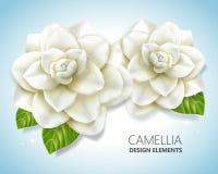 Elementos blancos de la camelia stock de ilustración