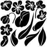 Elementos C de la flor Foto de archivo libre de regalías