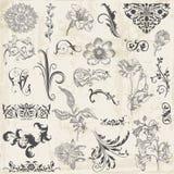 Elementos caligráficos do projeto da flor ilustração stock
