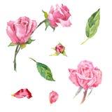 Elementos color de rosa de la acuarela Fotografía de archivo