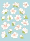 Elementos da flor da mola Imagens de Stock Royalty Free