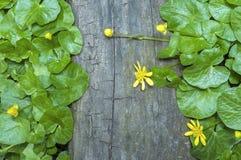 Elementos da natureza Foto de Stock