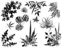 Elementos da planta de Grunge ilustração royalty free