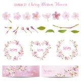 Elementos de Cherry Blossom Spring Background y del diseño Imágenes de archivo libres de regalías