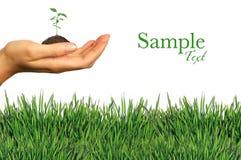 Elementos de jardinagem frescos verdes no branco Fotos de Stock Royalty Free