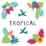 Elementos de la esquina tropicales dibujados mano floral del verano del paraíso Imagen de archivo libre de regalías