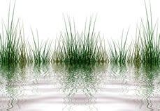 Elementos de la hierba stock de ilustración