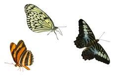 Elementos de la mariposa Imágenes de archivo libres de regalías