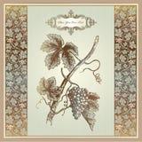 Elementos de la uva de la vendimia para la escritura de la etiqueta del vino, menú, impresión Fotos de archivo libres de regalías