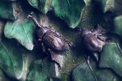 Elementos de los insectos, flores, pájaros de mamíferos en la vieja puerta de la entrada al templo de la familia santa Fotos de archivo libres de regalías